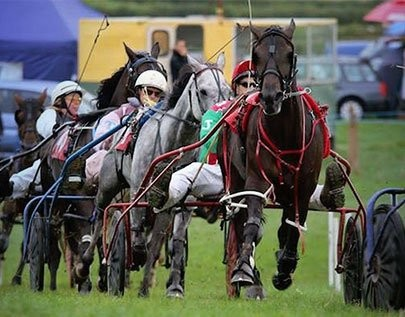 best Trotting betting odds comparison for Canada on this page