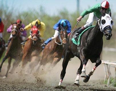 beste Pferdewetten und Wettquoten im Vergleich für Deutschland