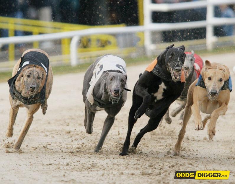 romford dogs betting odds