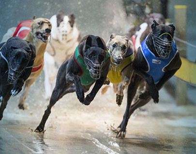 best greyhounds betting odds comparison in Kenya
