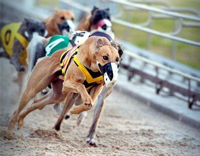 best greyhounds betting odds in Nigeria