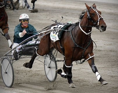ultimate Trotting betting odds comparison for New Zealand on this page