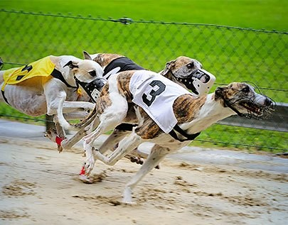 best greyhounds betting odds comparison in Uganda