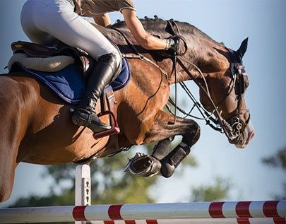 ultimate equestrian betting odds comparison in  South Africa