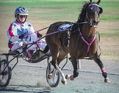 ultimate trotting betting odds comparison in  South Africa